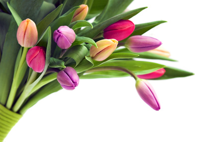 carte Un bouquet de tulipes